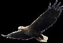eagle tiny