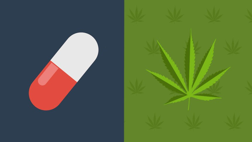 Marijuana Now a Possible Pain Alternative to Addictive Opioids