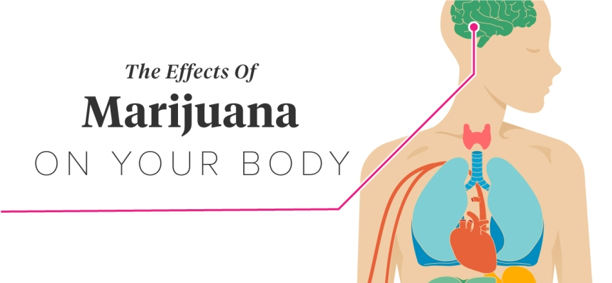 LATEST LEGIT STUDY: How marijuana harms your heart and blood pressure to bring you an early death