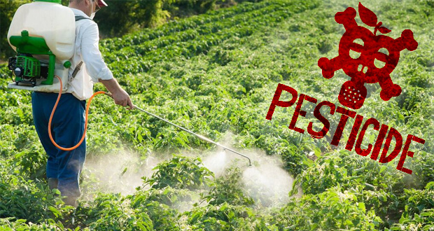 How GMO foods alter organ function and pose a very real health threat to humans. YOU ACTUALLY BECOME A PESTICIDE FACTORY!  PLEASE Don't do this to yourself or family!
