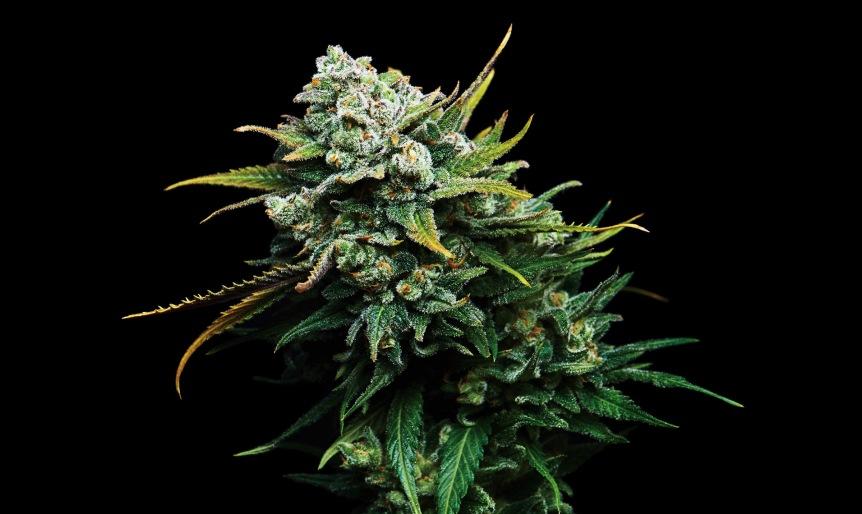 Marijuana IS Addictive & Can Negatively Affect Teens'Brains