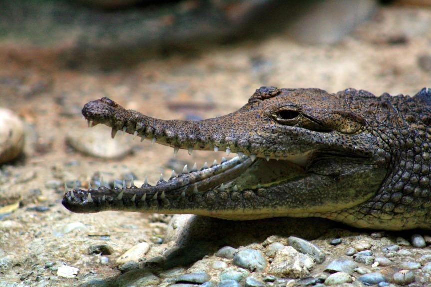 Krokodil Spells Death by 2 Years ofUsing