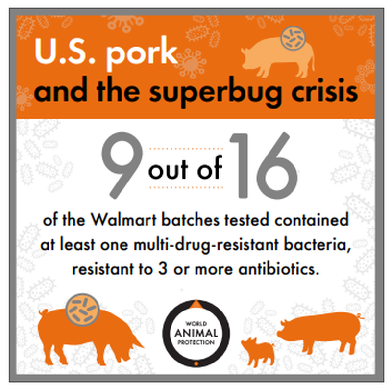 "Walmart Pork Found To Have ""Superbug"" Bacteria Resistant To Antibiotics"