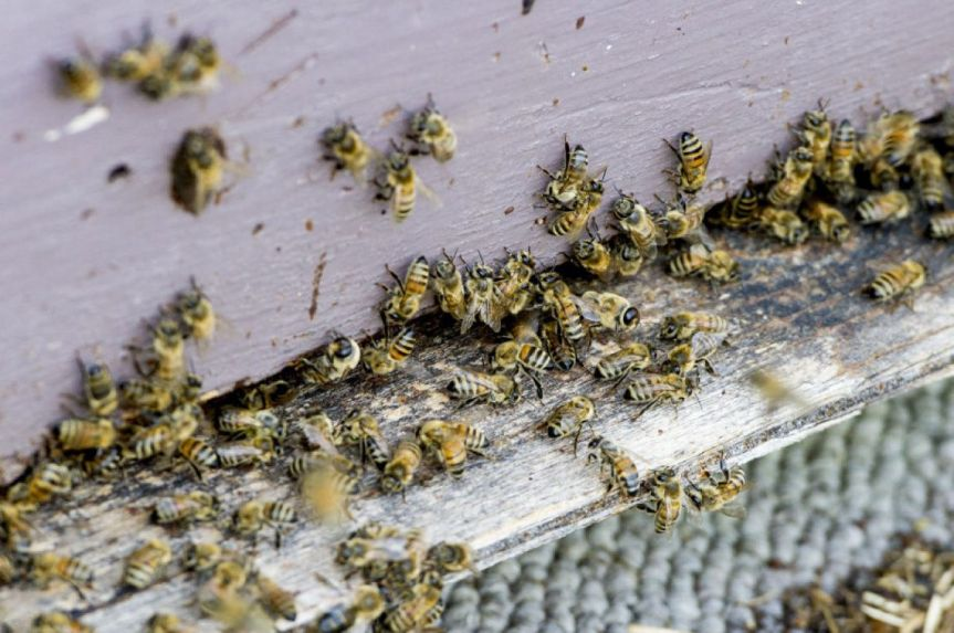 Neonicotinoid Pesticides Have Caused a Huge Surge in the Toxicity of USAgriculture