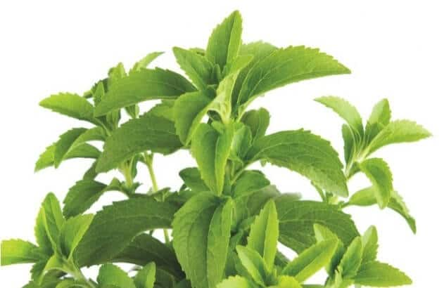 Buyer Beware: GMO Stevia Is Everywhere