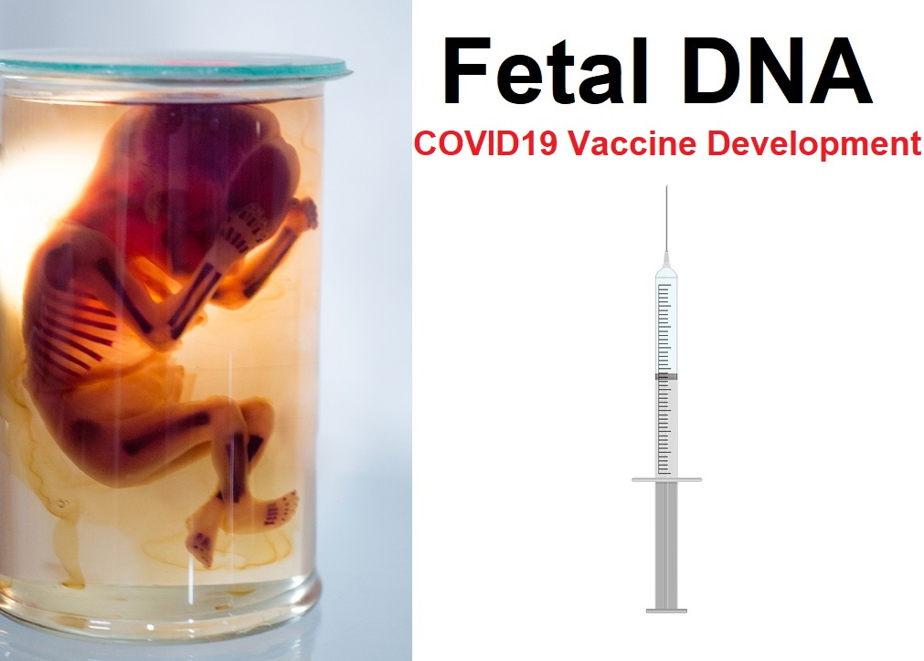 COVID-19 Vaccine Makers Using Aborted Fetal Cells