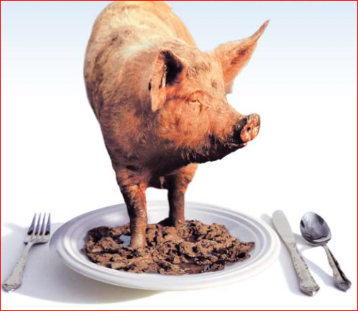 FACTS ON PIGS and PORK: Why We Shouldn't Consume Pork